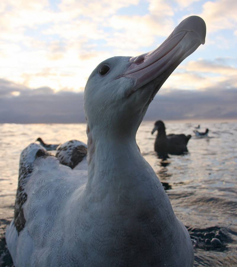 Albatross Conservation: It's up to all of us.