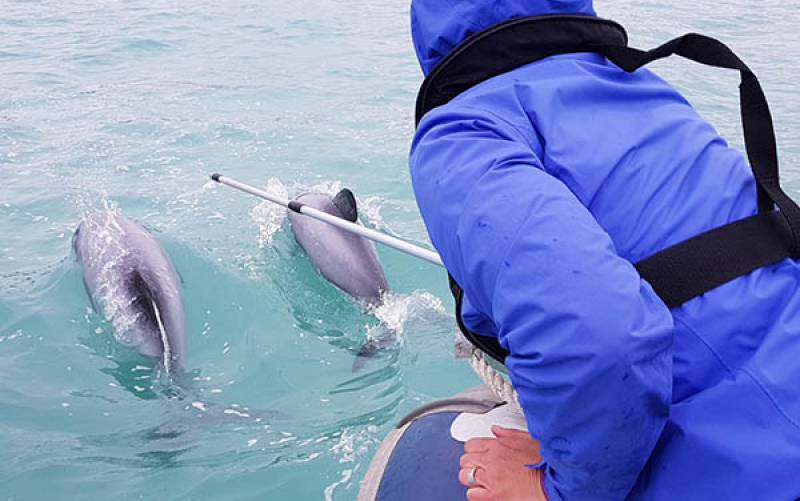 Breath Sampling Hector's Dolphins